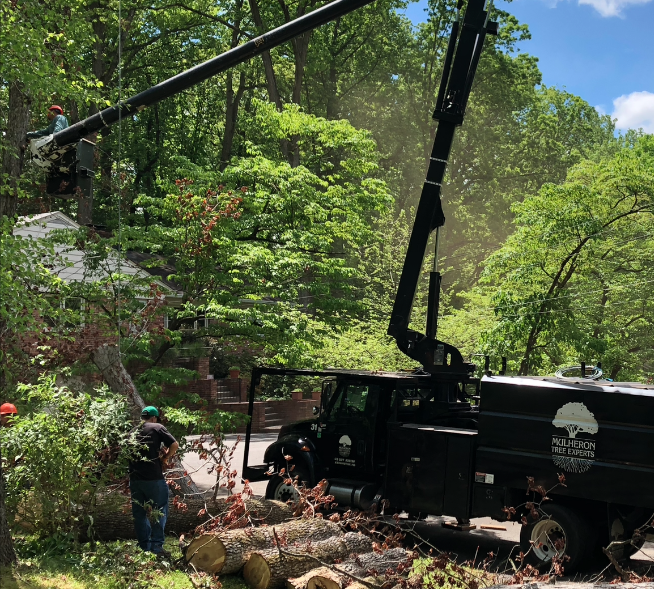 Tree Services - Tree Removal Image