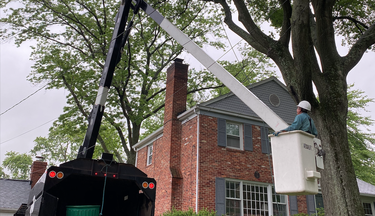 Tree Services - Tree Pruning Image
