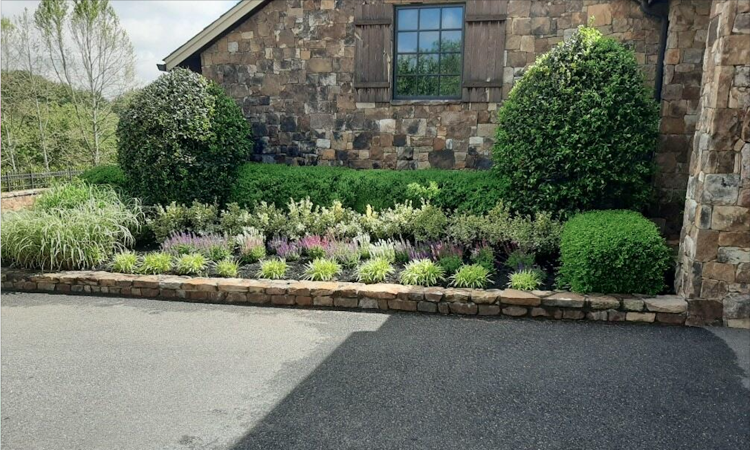 beautiful garden tree arrangement