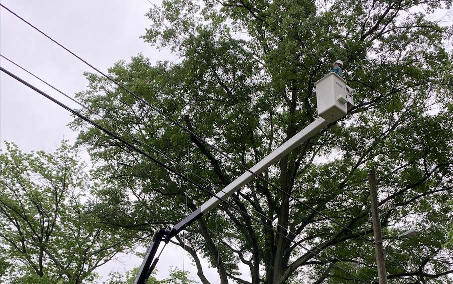image of man in crane for tree pruning