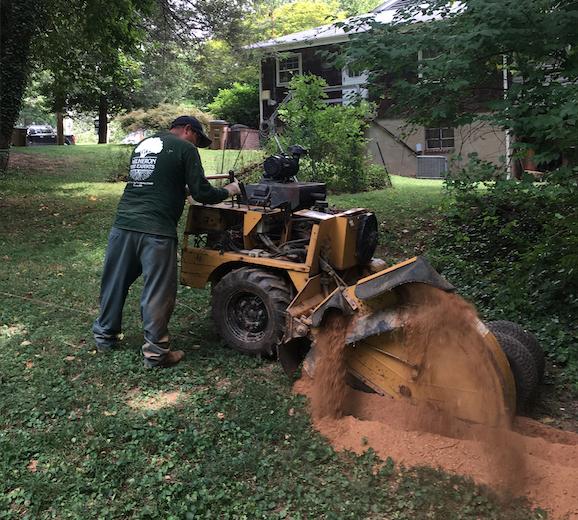 Stump Grinding & Stump Removal 1