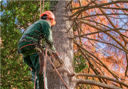 Man Removing a Tree Branch