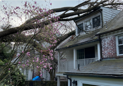 Emergency Services - Tree goes down on houses