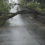 Care of Trees During a Storm