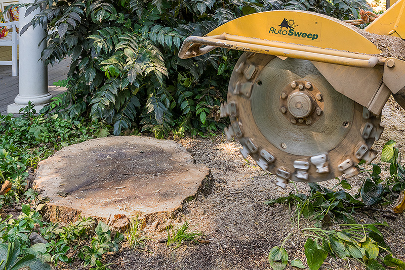 Tree Services - Stump Grinding & Stump Removal Image