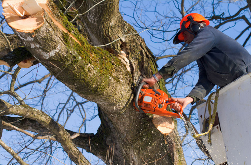 Man Removing a Tree