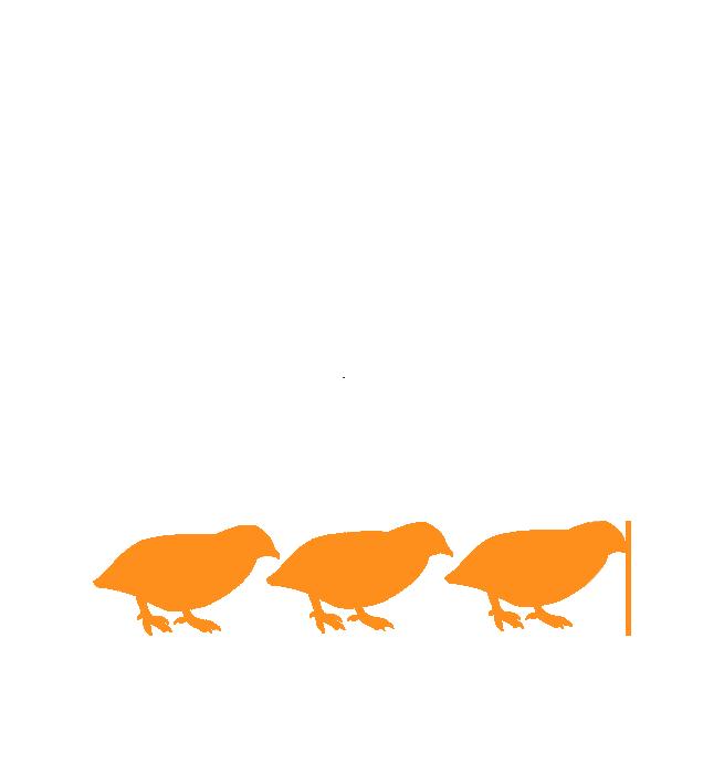 Covey Film Festival