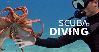 Activities: Scuba Diving