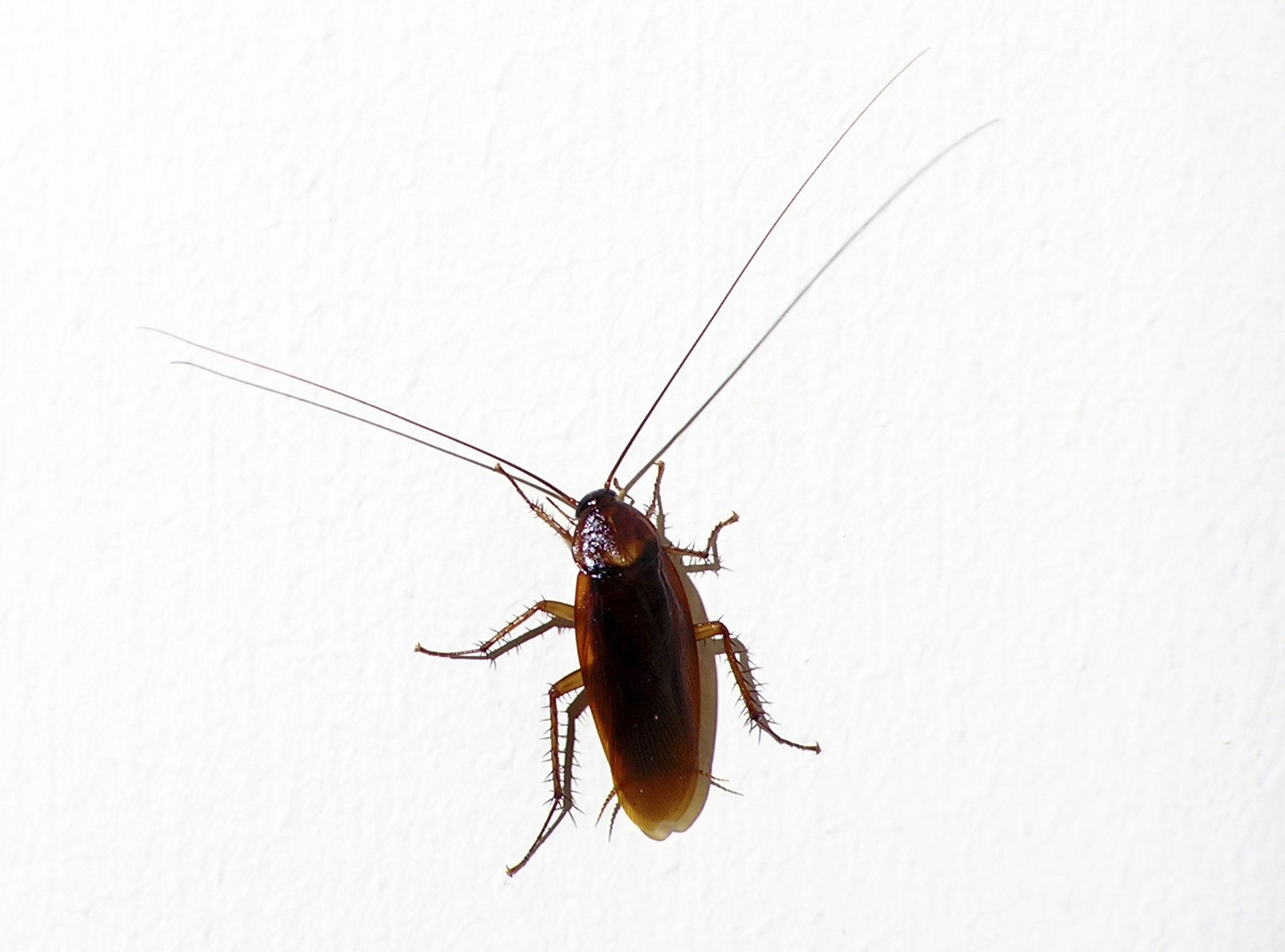Roach Problems