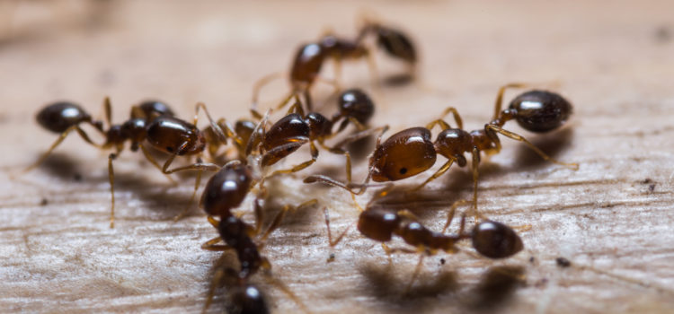 Ants, Ants, and More Ants!