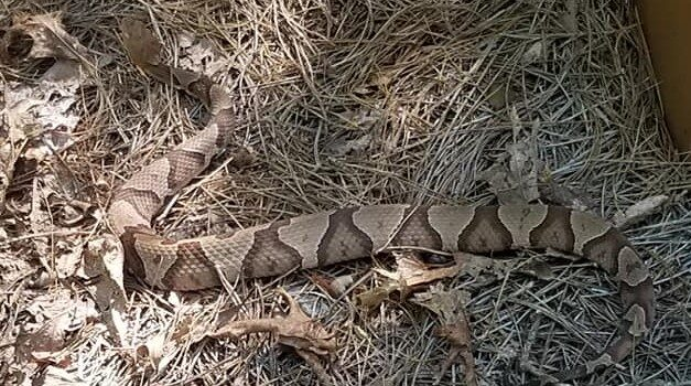 Snakes in Canton