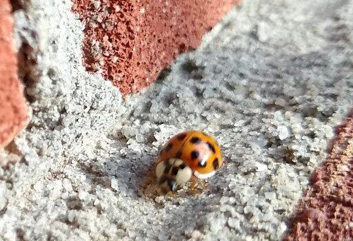 Ladybug Cherokee County Georgia
