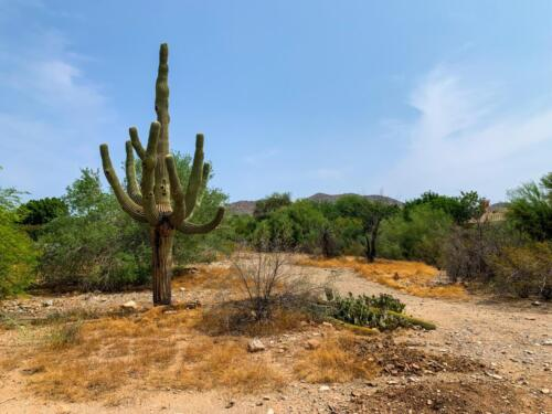 10834 E Laurel Ln. Scottsdale, AZ 85259 Lot For Sale // Emily Wertz, Local Real Estate // JustClickYourHeels.com