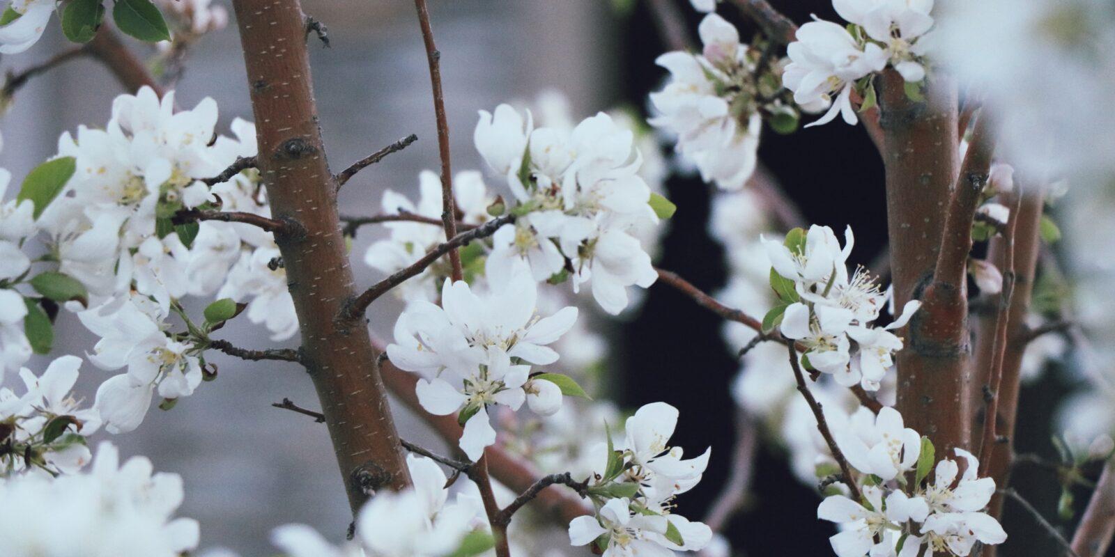 DH- Pruning