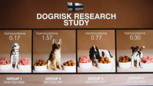 Dogrisk research study
