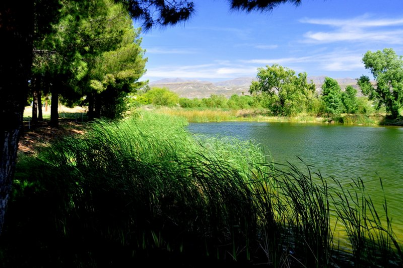 Pond and Cattails