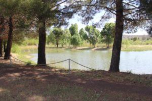park-pond_tom_Kenson_2016-3-15