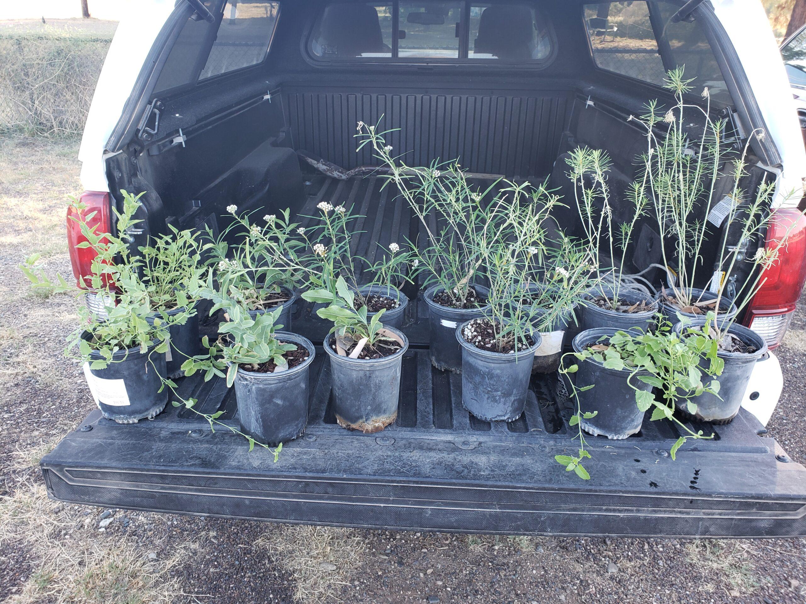 Plants from Desert Botanical Gardens