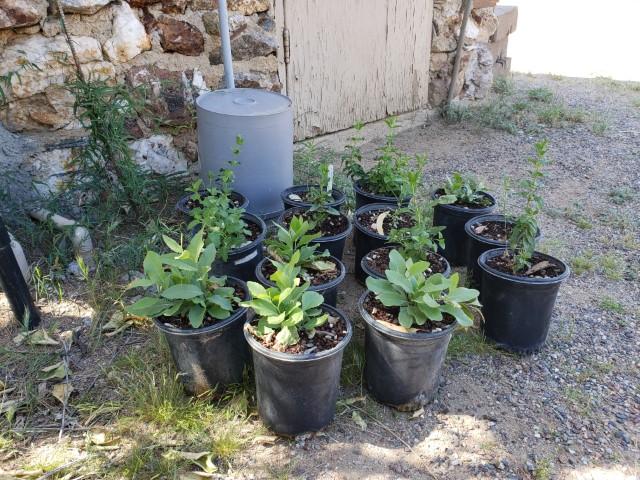 Plants donated by Desert Botanical Gardens