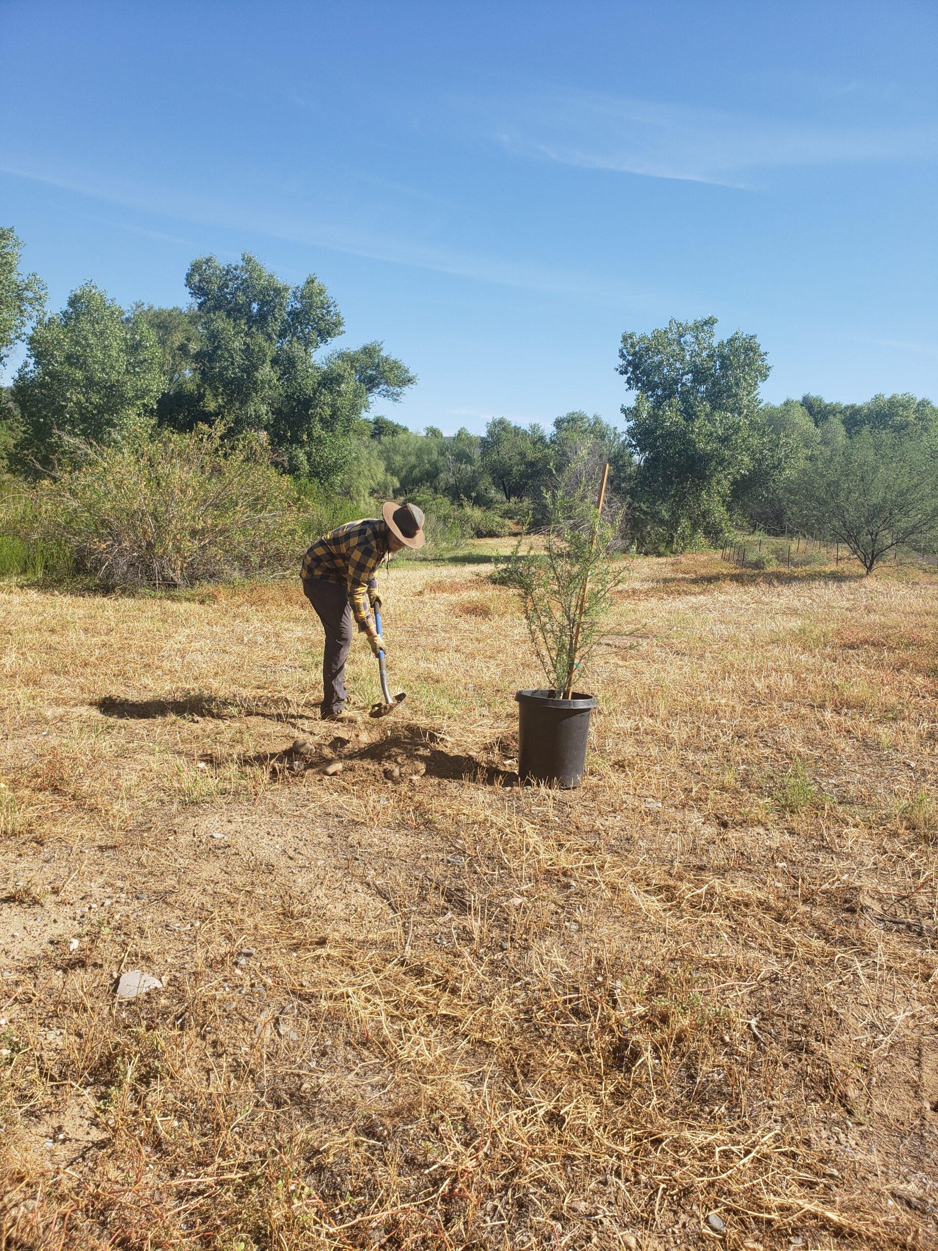 Sam Planting