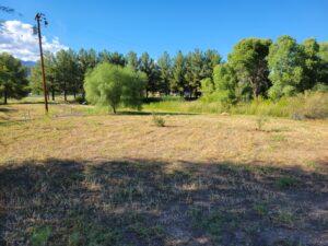2 ironwood in center-desert willow on left