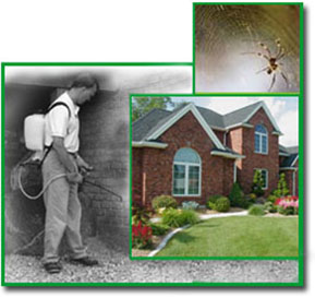 Perimeter Pest control in Sterling heights
