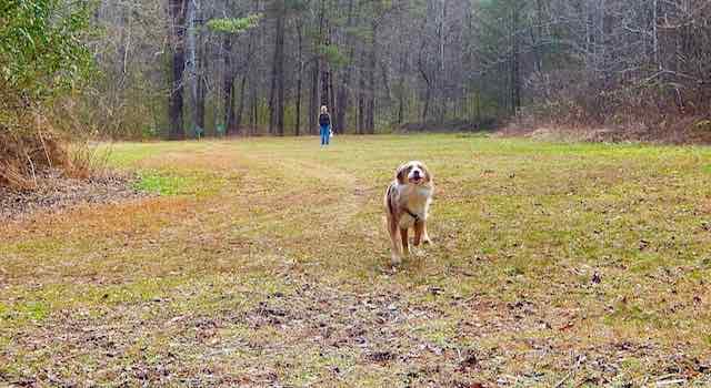 Open field at Dittmer Watts Park