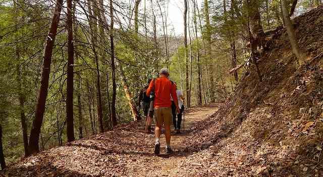 Trail to Big Bradley Falls
