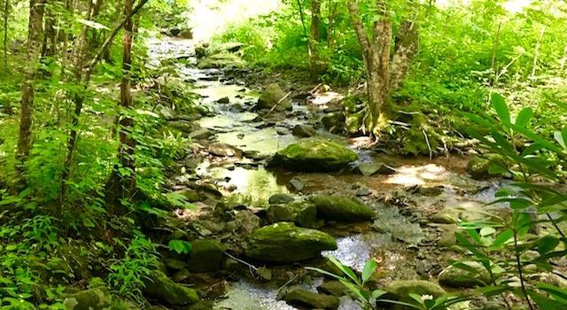 Creek Along Profile Trail Hike