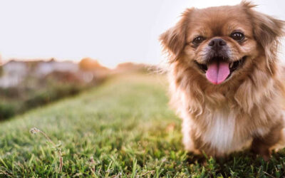 Estate Planning for Your Pet: Protect Your Furry Family