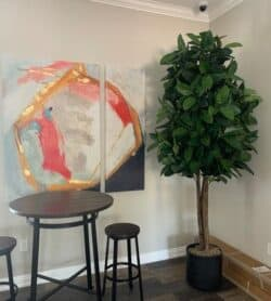 Large Rubber Tree in hospitality suite