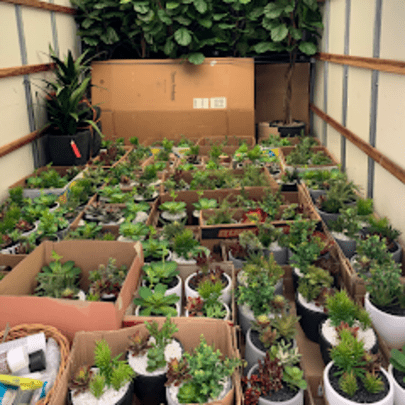 ARTIFICIAL TREES AND PLANTS BEING DELIVERED