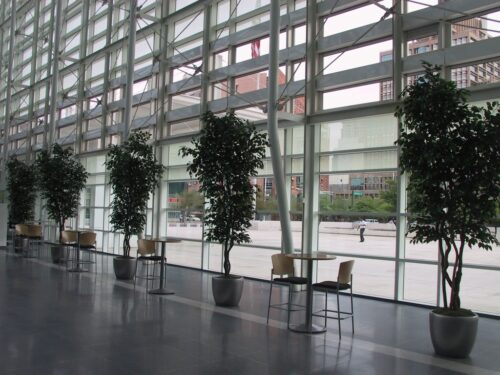 commerial artificial Ficus Trees at Courthouse