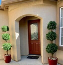 Outdoor Triple Ball Topiary Trees