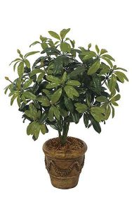 Outdoor Rhododendron