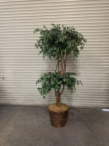 artificial sculptual ficus tree