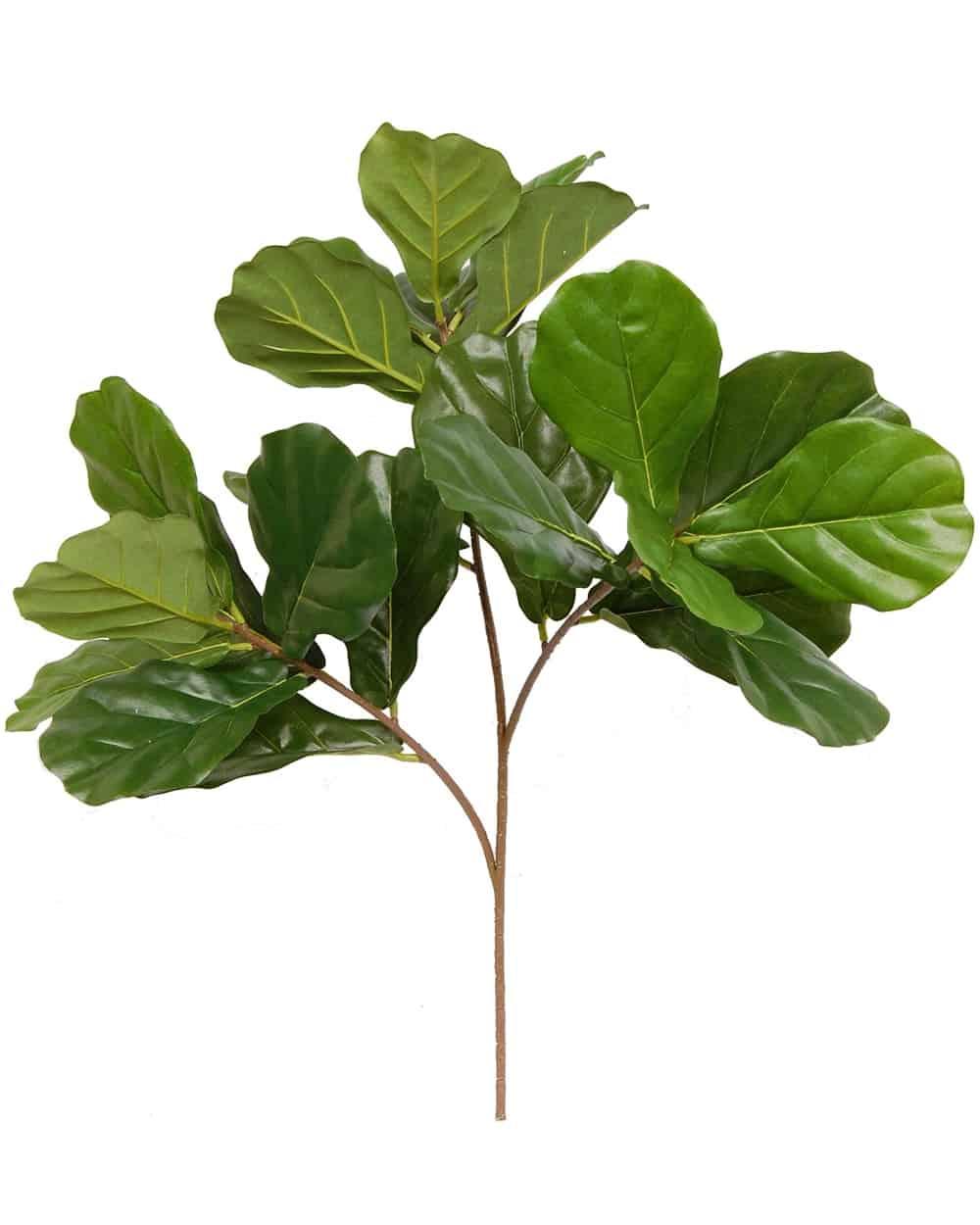 Fiddle Leaf Fig Spray