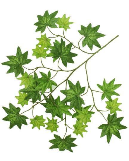 Maple Leaf Spay