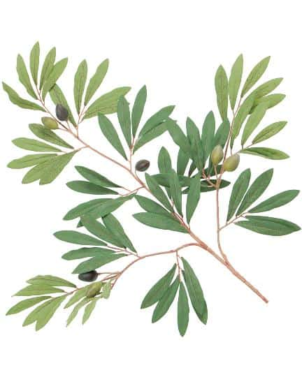 Olive with berries spray