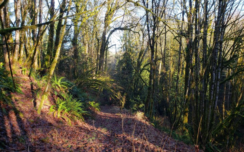 Your Private Nature Preserve! – 35 Acres – Deer Island