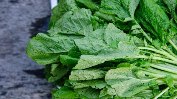 What are Mustard Greens and how do they compare to Collard Greens?