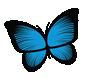 Annabel's Closet Butterfly