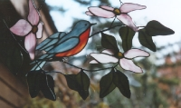 Open dogwood with Bluebird