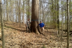Henry County Hardwoods