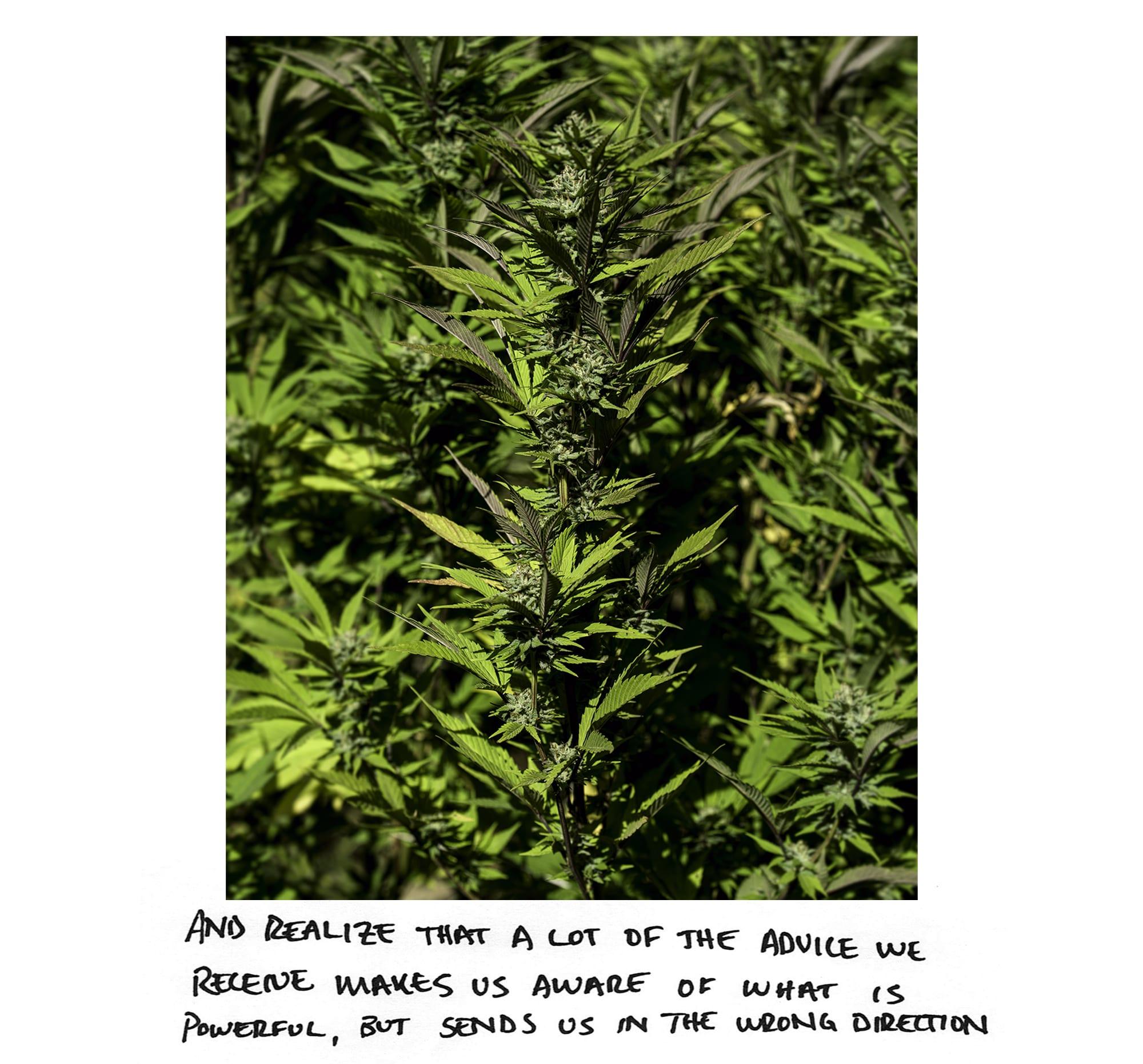 WeedIG_10