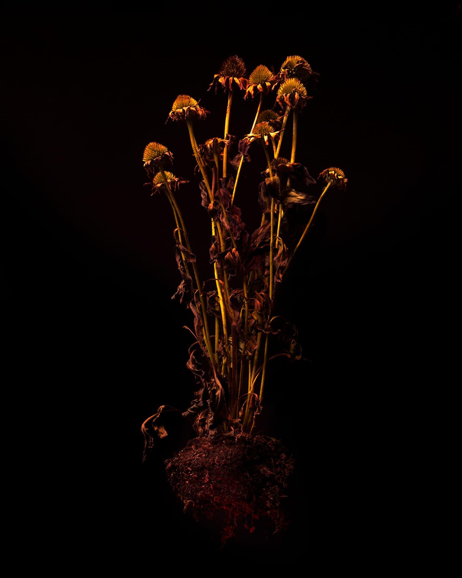 flowers_sized-1