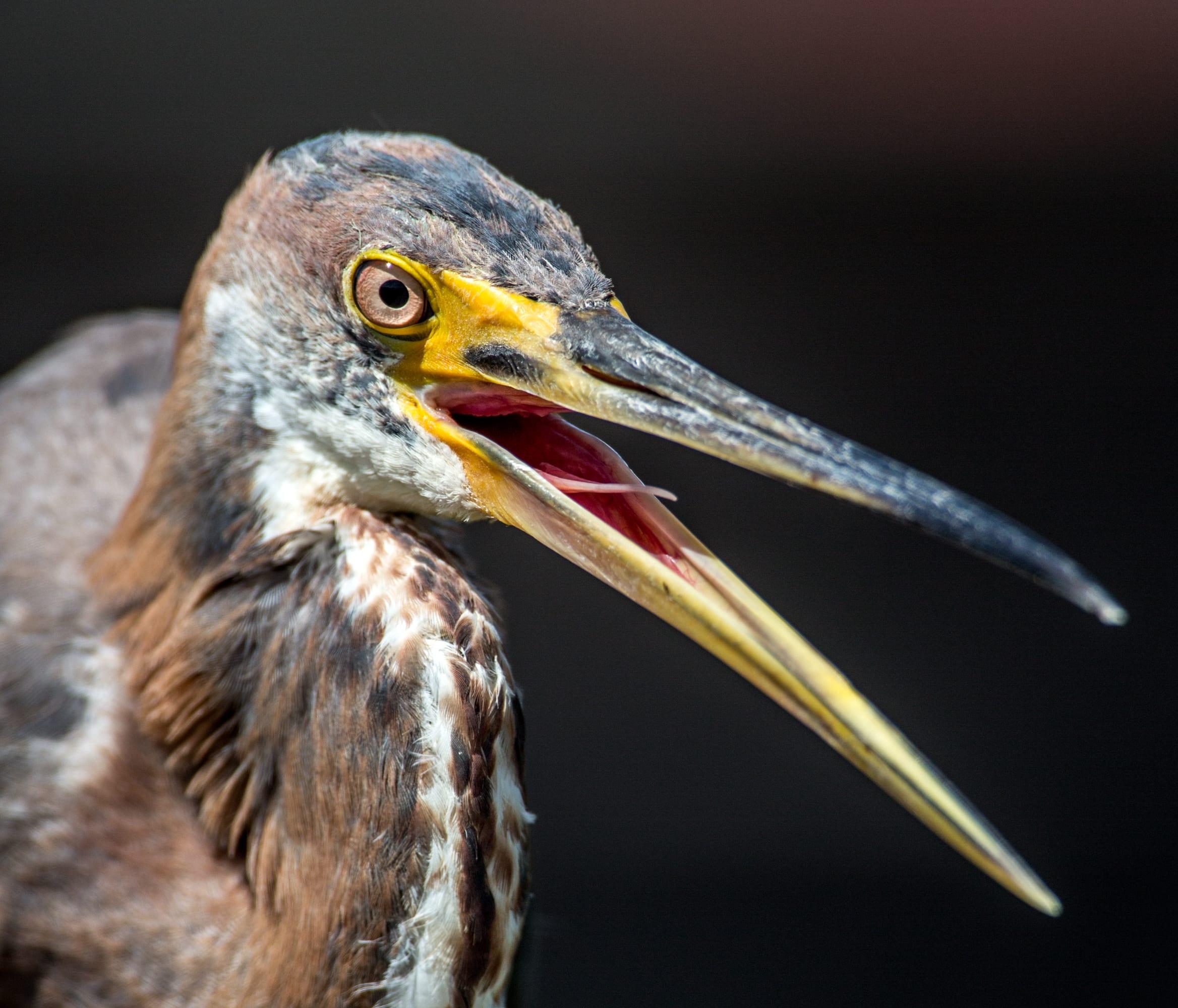 heron_egrets_sized-2