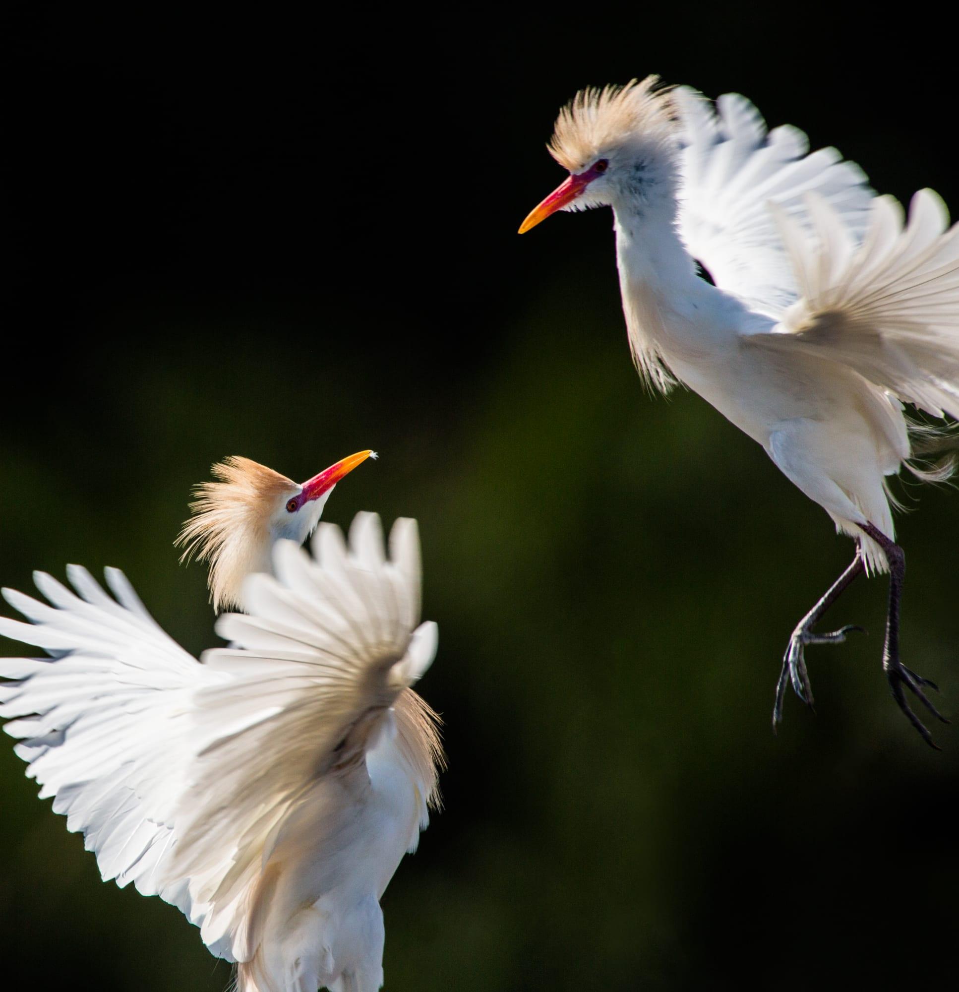 heron_egrets_sized-6