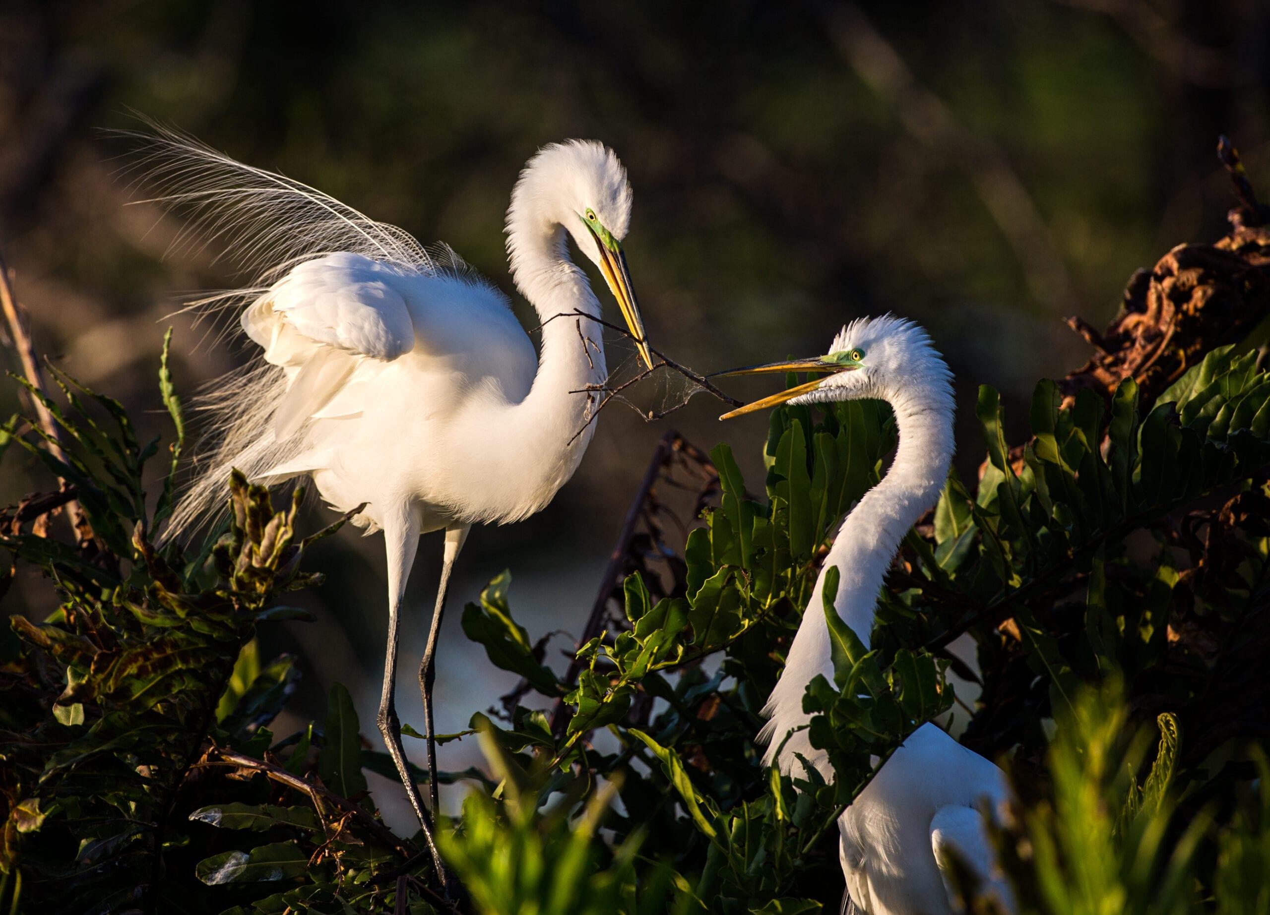 heron_egrets_sized-7