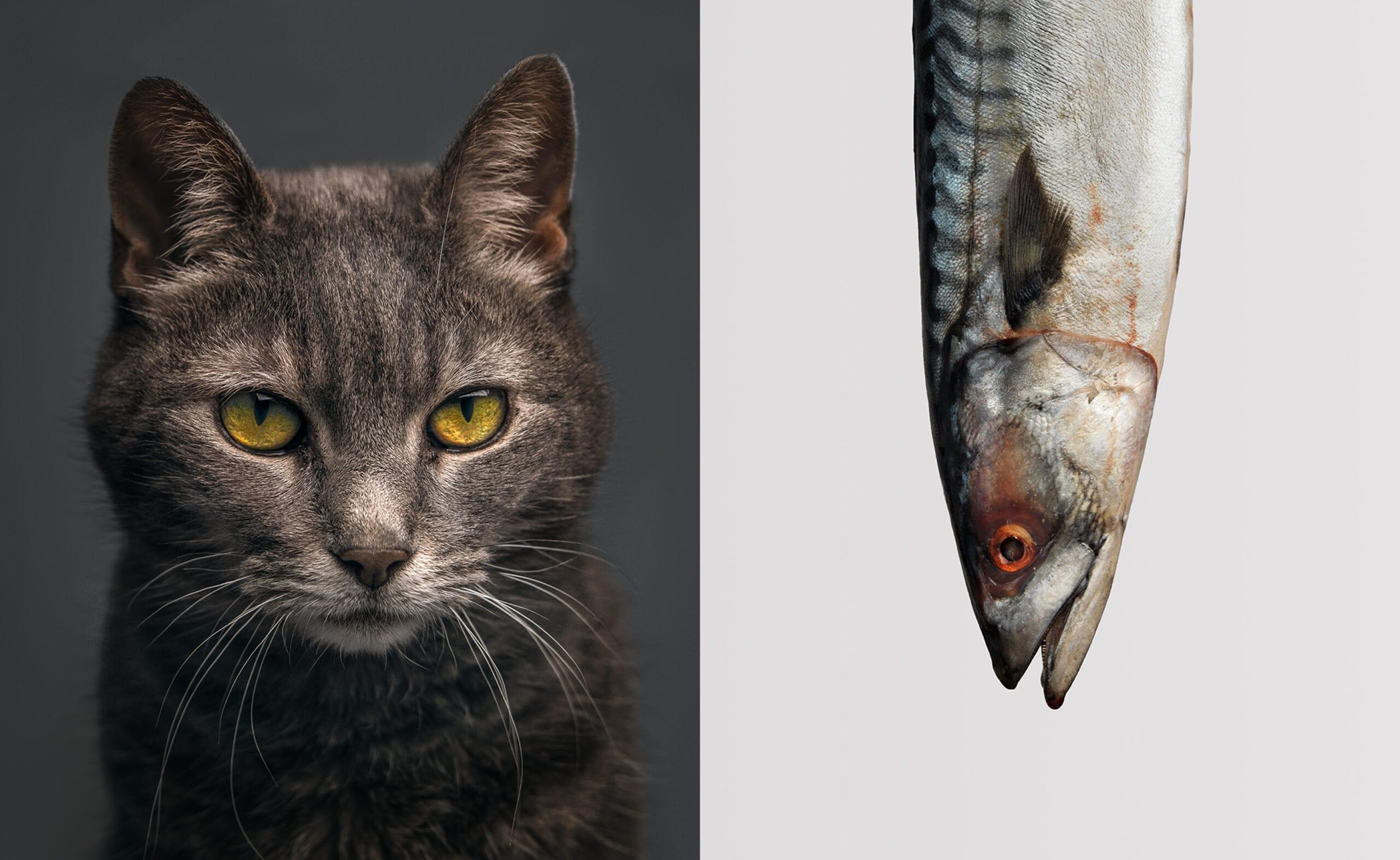 pet portraits-1